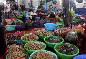 Bật mí kinh nghiệm mua sắm hải sản Cát Bà tươi ngon, giá rẻ